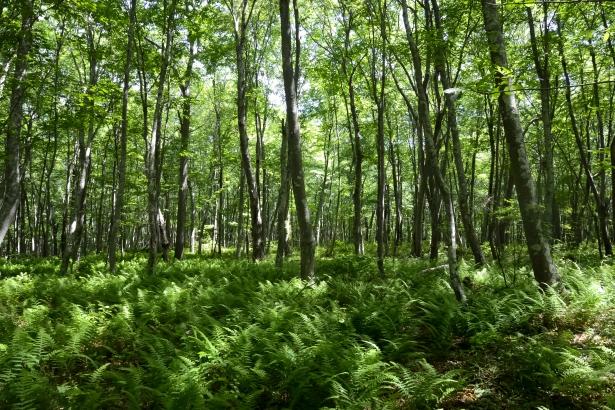 Hike-2888 ferns