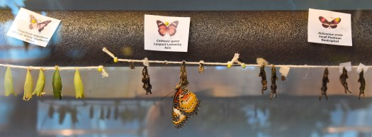 Butterfly birthing room
